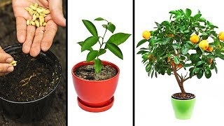Download 15 PLANTS YOU CAN EASILY GROW IN YOUR OWN KITCHEN Video