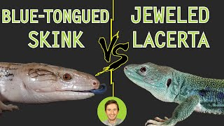 Download Jeweled Lacerta vs Blue-Tongued Skink - Head To Head Video