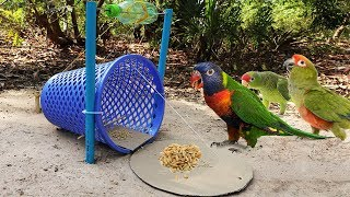 Download Building Easy Parrot Trap Make From Basket N Cardboard - Technology Parrot Trap Video