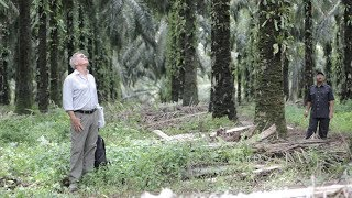 Download Harrison Ford Learns How Palm Oil Is Linked to Deforestation Video