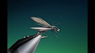 Download Tying a Float foam ant with Barry Ord Clarke Video
