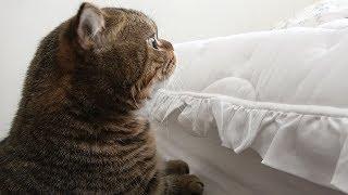 Download 아프고 힘들 때 고양이들이 옆에 있으면 좋은 점 Video
