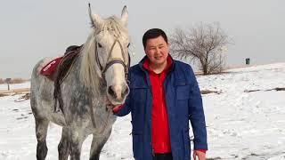 Download Жогорку Кеңештин депутаты Акылбек Жамангулов саясаттан тышкары Video