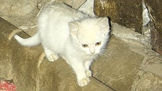 Download White kittens are still afraid of me Video