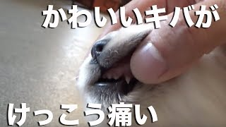 Download 【レポート】歯が生えてきました! Video