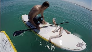 Download Giant squid wraps its tentacles around my paddle board! Video