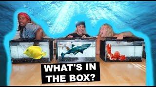 Download WHAT'S IN THE BOX CHALLENGE! (UNDERWATER EDITION) Ft. GOTDAMNZO Video