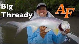 Download Thread fin Salmon, Barramundi and Baby Crocodiles saltwater Andysfishing Fishing Video EP.222 Video