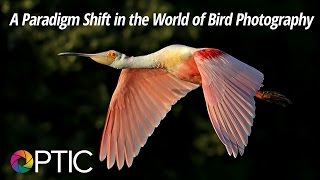 Download Optic 2016: A Paradigm Shift in the World of Bird Photography Video