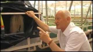 Download aeroponika - pomidory Video