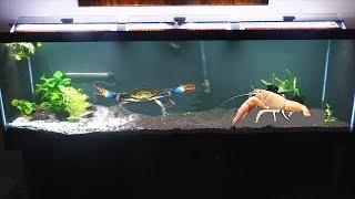 Download CRAB BATTLE! Giant Blue Crab VS Giant crayfish! Video
