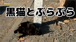 Download 【野良猫】黒猫とぶらぶら【地域猫】 Video