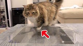 Download 猫にサランラップドッキリ仕掛けてみた Video
