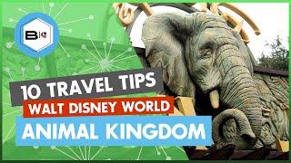 Download Top 10 Tips Visiting Disney's Animal Kingdom at Walt Disney World Video