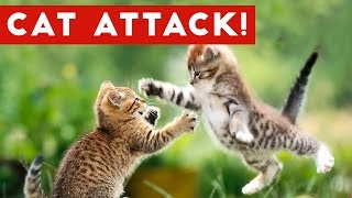 Download Funniest Cat Attack Videos Compilation | Funny Pet Videos Video
