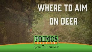 Download Where to Aim on a Deer Video