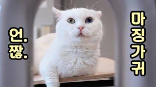 Download 선풍기 바람 맞는 고양이 - 짧은 영상 모음 Video