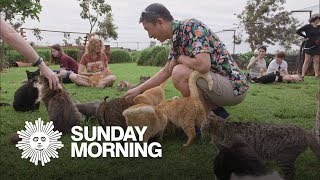 Download Island-Hopping: The Lanai Cat Sanctuary Video