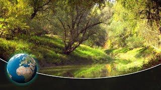 Download The Sava Floodplains - Croatia's secret paradise Video