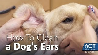Download Cleaning A Dog's Ears - Veterinary Training Video