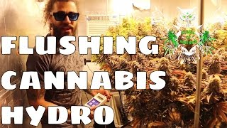 Download Flushing Hydroponics | Flushing Weed Garden Before Harvesting (Hydro) Video