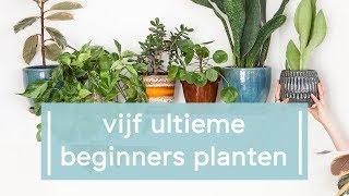Download 5 makkelijke planten voor beginners! - Super Groene Vingers Video