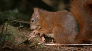 Download Vroege Vogels - Drukke tijd voor de eekhoorn Video