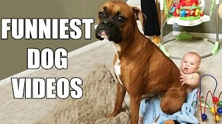 Download *Try Not To Laugh Challenge* Funny Dogs Compilation [MUST SEE] Funny Dog Videos & Vines 2016 Video