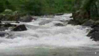 Download Life Cycle of Salmon (Discovery Channel) Video