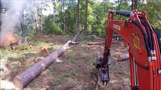 Download Taking Down Some Big Trees! Video