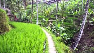 Download [HD] 1080p, Bali rice terrace in Tegalalang Video