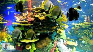 Download 2 Hours of Beautiful Coral Reef Fish, Relaxing Ocean Fish, Aquarium Fish Tank & Relax Music 1080p HD Video