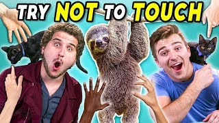 Download Try Not To Touch Challenge (ft. Sid The Sloth!) Video