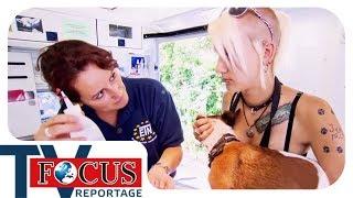 Download Ärztin der Straßenhunde - das HundeDoc-Mobil | Focus TV Reportage Video