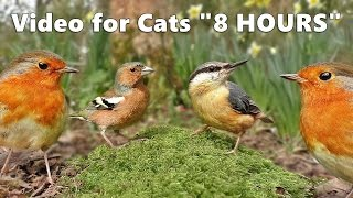 Download Cat Entertainment : Video and Bird Sounds for Cats * The Ultimate 8 HOURS * Video