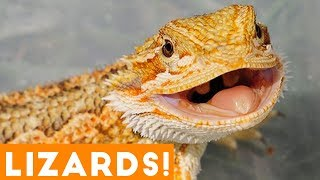 Download Ultimate Funny Lizard Compilation of 2018 | Funny Pet Videos Video
