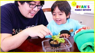 Download Feeding our new Pet Venus Fly Trap Plant! Video