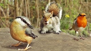 Download Movies for Cats - Birds and Squirrel Fun Video