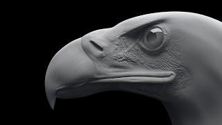 Download Eagle 3ds max modeling Tıme-lapse / 3DS max Моделирование орла Video