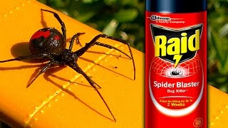 Download Sneaky Redback Spider Raid Deadly White Christmas Graphic How To Video Video