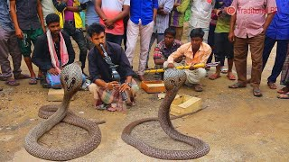 Download amazing street performers or busker | cobra flute music played by snake charmer Video