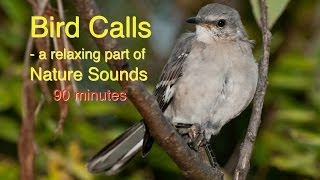 Download Bird Calls of Nature Sounds Video