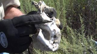 Download Corsair Crash - Wreck Visit to FG-1A Corsair on May 21 2011 Video