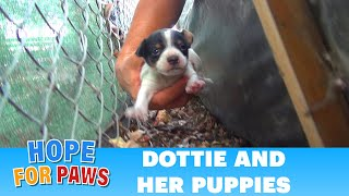 Download Hope For Paws: Homeless mom gives birth to three puppies on a college campus. Please share. Video