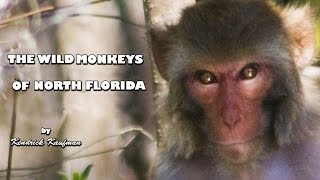 Download The Wild Monkeys of North Florida (Pictorial) Video
