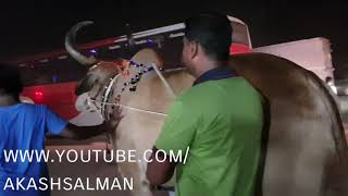 Download Gabtoli gorur hat. 30th August 2017. The biggest qurbani cows of Bangladesh. Video