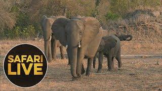Download safariLIVE - Sunset Safari - August 12, 2018 Video