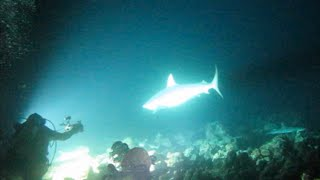 Download Cocos Island Whitetip & Bull Shark Night Hunt Video