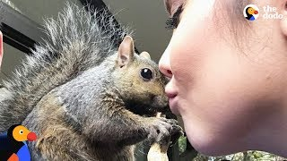 Download Squirrel Keeps Coming Back To Rescue Mom - GIBBY | The Dodo Video