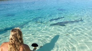 Download She Was FEEDING SHARKS!!! Video